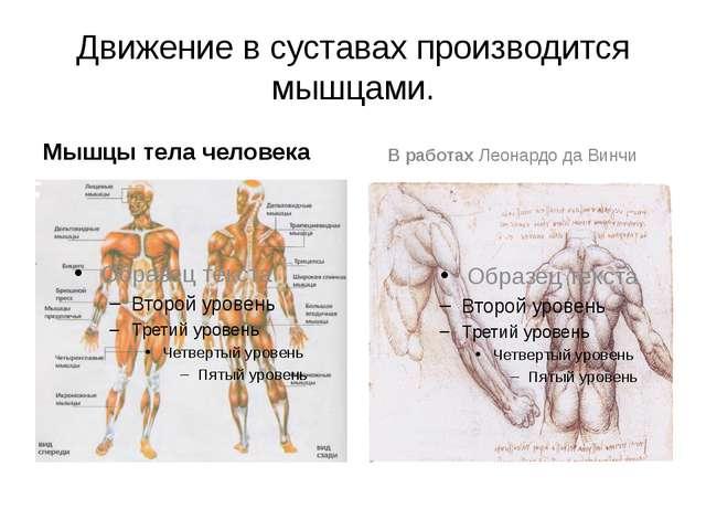 Движение в суставах производится мышцами. Мышцы тела человека В работах Леона...