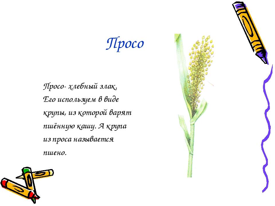 Просо Просо- хлебный злак. Его используем в виде крупы, из которой варят пшён...
