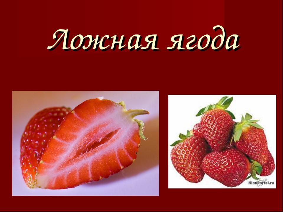 Ложная ягода