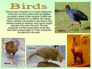 There are some 70 species of birds found nowhere else in the world, more tha