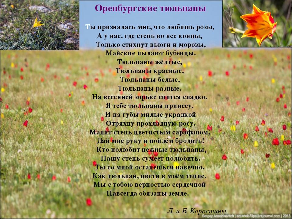 Оренбургские тюльпаны Ты призналась мне, что любишь розы, А у нас, где степь...