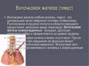 Вилочковая железа (тимус) Вилочковая железа (зобная железа, тимус) - это цент