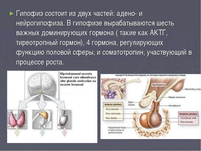 Гипофиз состоит из двух частей: адено- и нейрогипофиза. В гипофизе вырабатыва...