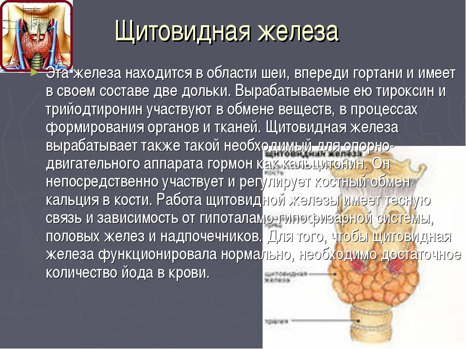 Щитовидная железа Эта железа находится в области шеи, впереди гортани и имеет...