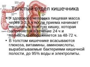 Толстый отдел кишечника У здорового человека пищевая масса через 3-3,5 ч посл