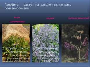 Галофиты - растут на засоленных почвах, солевыносливые астра солончаковая кер