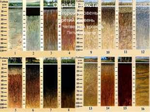 Многообразие почв