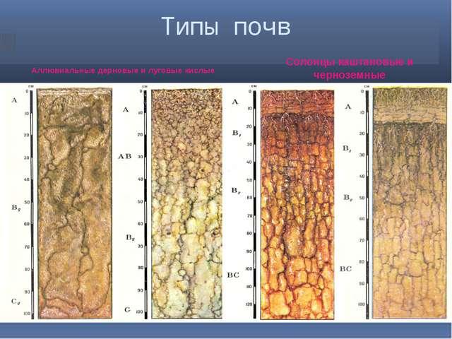 Типы почв Аллювиальные дерновые и луговые кислые Солонцы каштановые и чернозе...