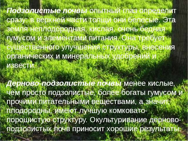 Подзолистые почвы опытный глаз определит сразу: в верхней части толщи они бел...