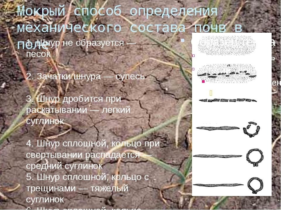 Мокрый способ определения механического состава почв в поле 1. Шнур не образу...