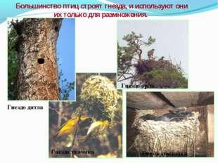Большинство птиц строят гнезда, и используют они их только для размножения. Г