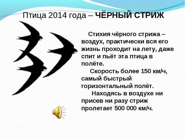 Птица 2014 года – ЧЁРНЫЙ СТРИЖ Стихия чёрного стрижа – воздух, практически вс...