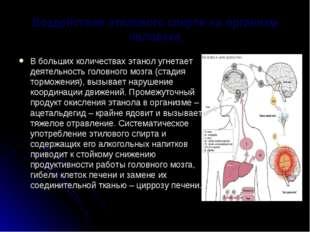 Воздействие этилового спирта на организм человека В больших количествах этано