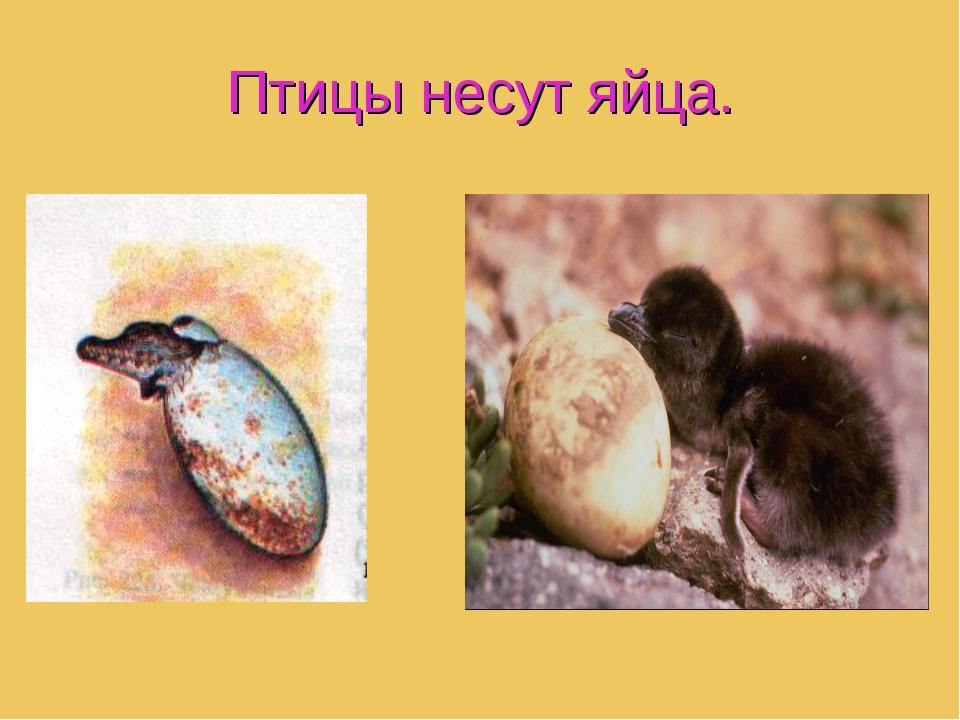 Птицы несут яйца.