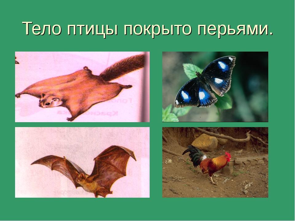 Тело птицы покрыто перьями.