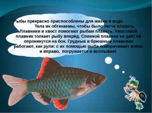 Рыбы прекрасно приспособлены для жизни в воде. Тела их обтекаемы, чтобы было