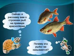 Сейчас я расскажу вам о строении рыб на примере краснопёрки. Почему эта рыба