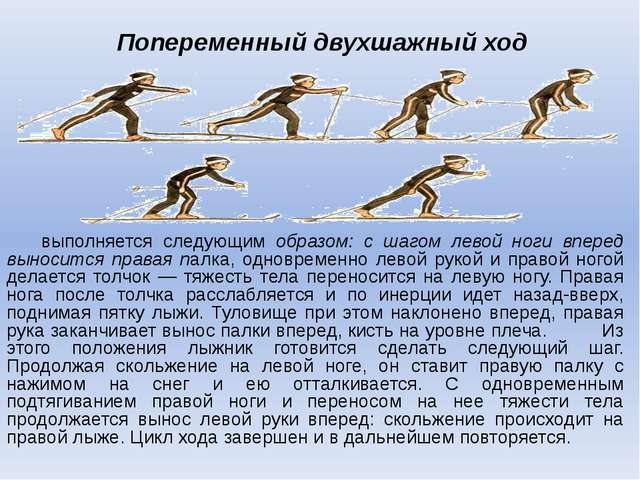 Попеременный двухшажный ход выполняется следующим образом: с шагом левой ног...