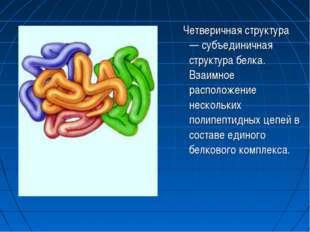 Четверичная структура — субъединичная структура белка. Взаимное расположение