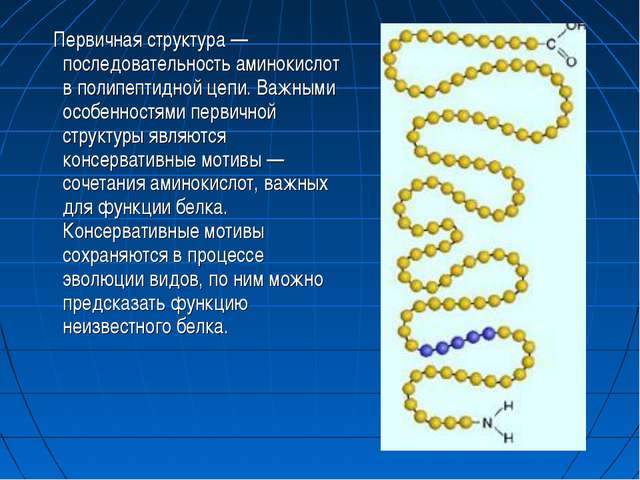 Первичная структура — последовательность аминокислот в полипептидной цепи. В...