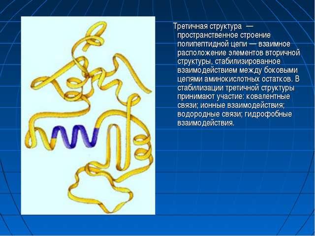 Третичная структура — пространственное строение полипептидной цепи — взаимно...