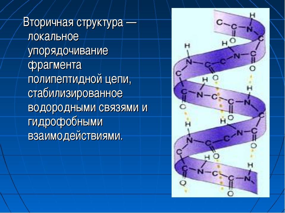 Вторичная структура — локальное упорядочивание фрагмента полипептидной цепи,...