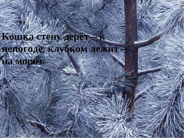 Кошка стену дерёт – к непогоде, клубком лежит – на мороз.