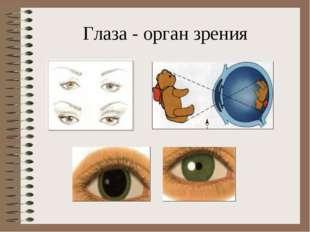 Глаза - орган зрения