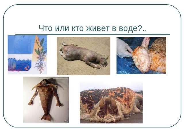 Что или кто живет в воде?..