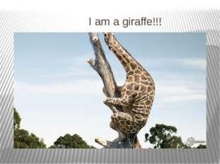I am a giraffe!!!