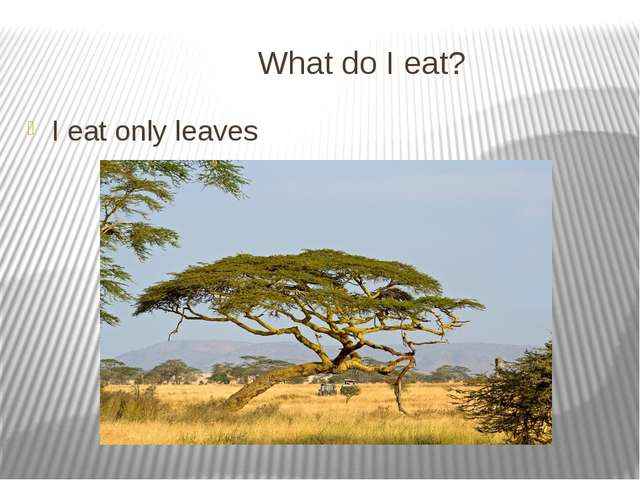 What do I eat? I eat only leaves