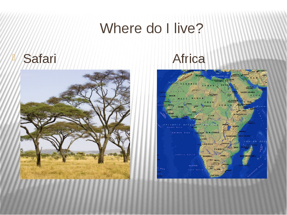 Where do I live? Safari Africa