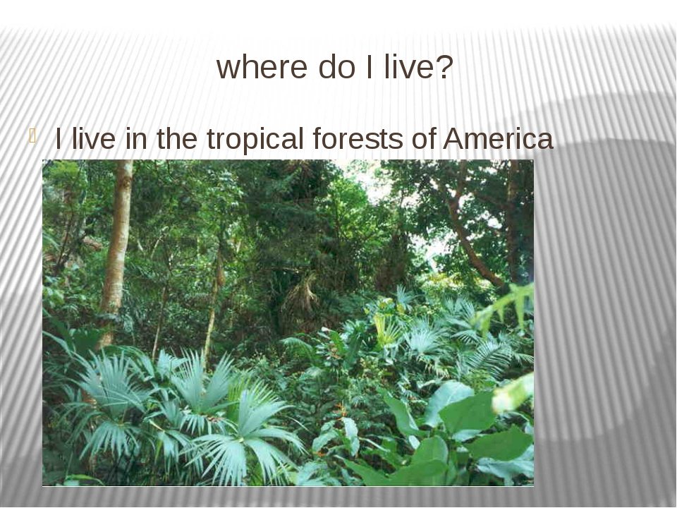 where do I live? I live in the tropical forests of America