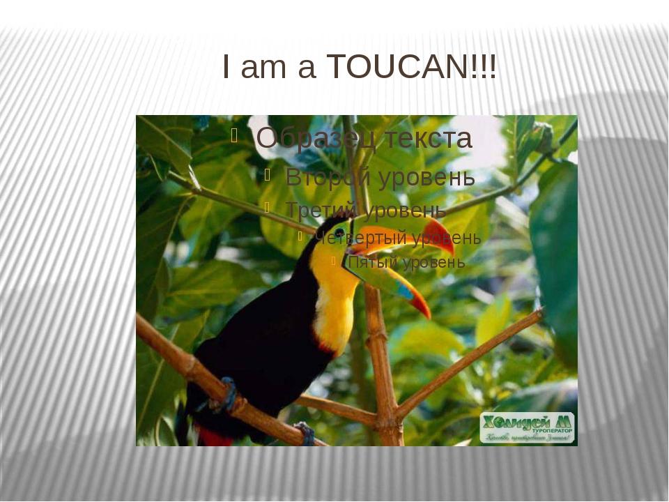 I am a TOUCAN!!!