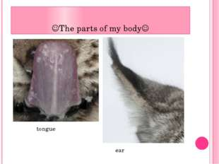 The parts of my body tongue ear