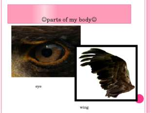 parts of my body eye wing