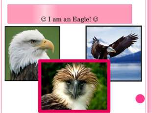  I am an Eagle! 