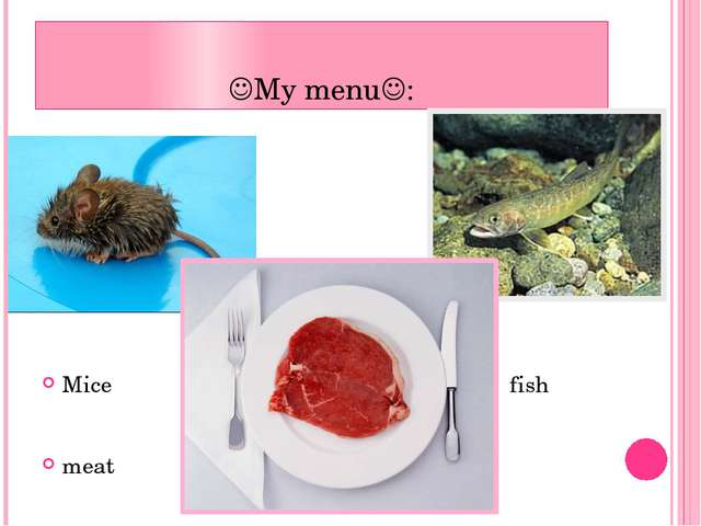 My menu: Mice fish meat