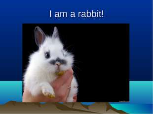 I am a rabbit!