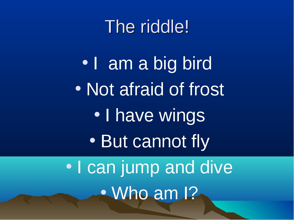 The riddle! I am a big bird Not afraid of frost I have wings But cannot fly I...