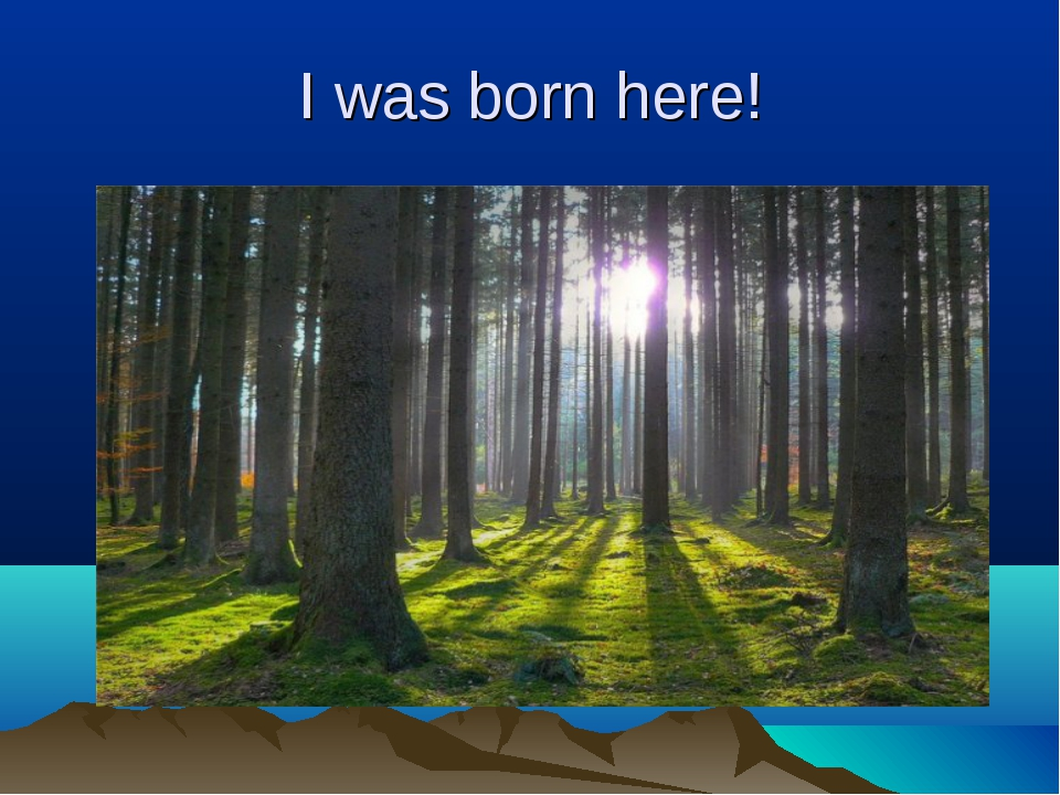 I was born here!
