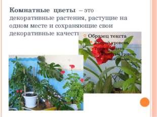 Комнатные цветы– это декоративные растения, растущие на одном месте и сохра