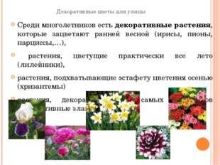 Декоративные цветы для улицы Среди многолетников естьдекоративные растения,