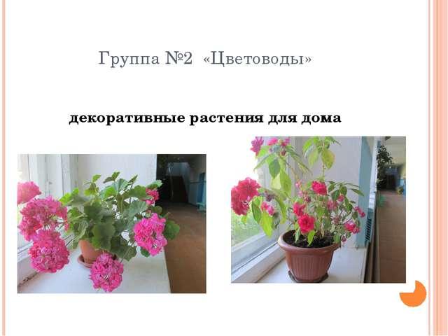 Группа №2 «Цветоводы» декоративные растения для дома