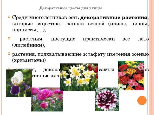 Декоративные цветы для улицы Среди многолетников естьдекоративные растения,...