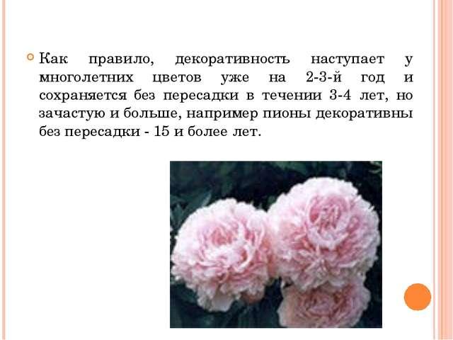 Как правило, декоративность наступает у многолетних цветов уже на 2-3-й год...