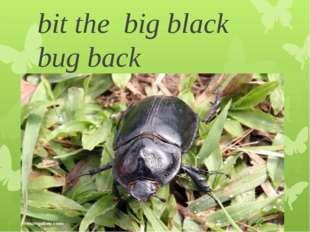 bit the big black bug back