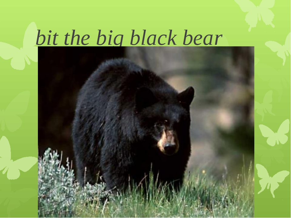 bit the big black bear