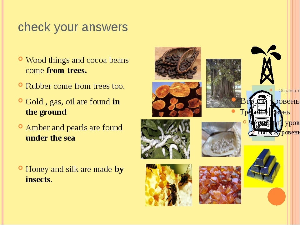 check your answers Wood things and cocoa beans come from trees. Rubber come f...