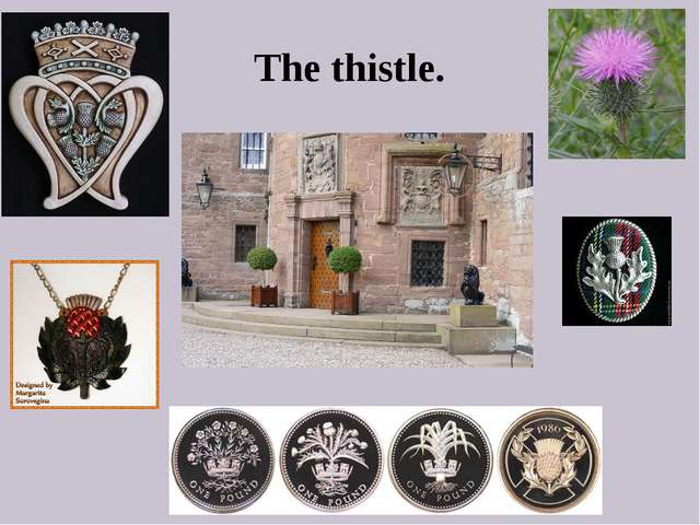 The thistle.